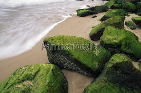 moss covered rocks along the ocean