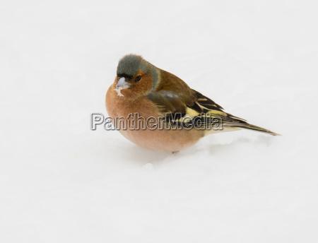 closeup nahaufnahme garten winter tier vogel