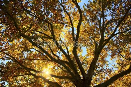 sun filtering through a tree