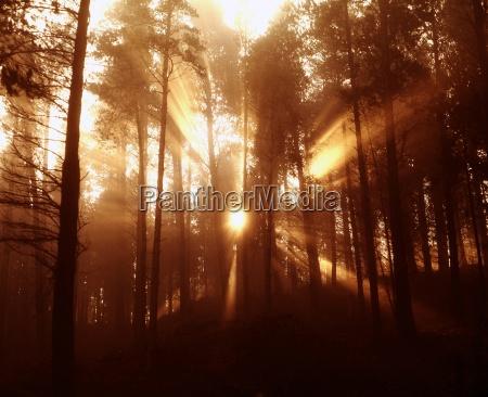 conifer woods in the vee gap