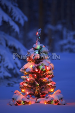 illuminated christmas tree in a forest