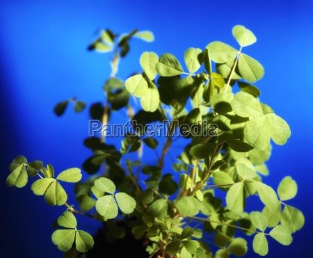 stilleben blau blatt baumblatt makro grossaufnahme