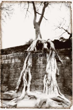 ta prohm temple complex of angkor