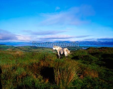 wild horse bantry bay co kerry