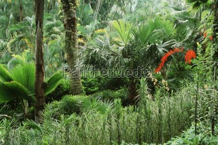 tropical forest singapore botanic gardens