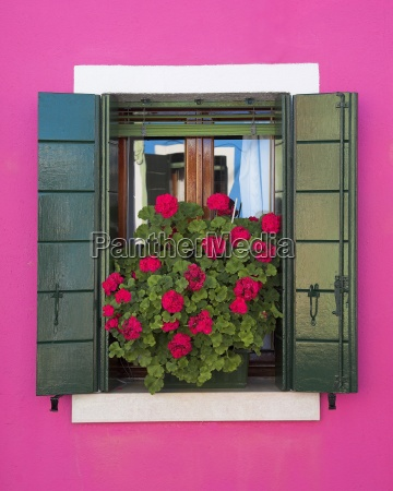 pink wall and green shutters burano
