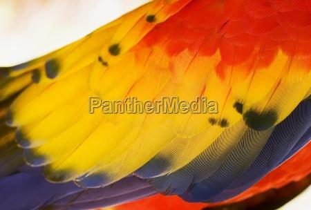 papageienfluegels