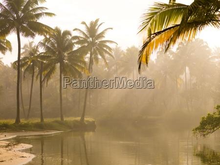 palm trees and sunbeams kerala india