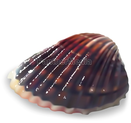 colorful clam on a white background