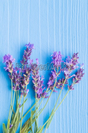 lila blumenstrauss purpur lavendel kraut bukett