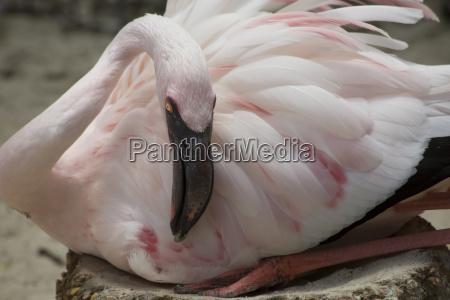geburt entbindung gebaeren vogel beschuetzen schutz