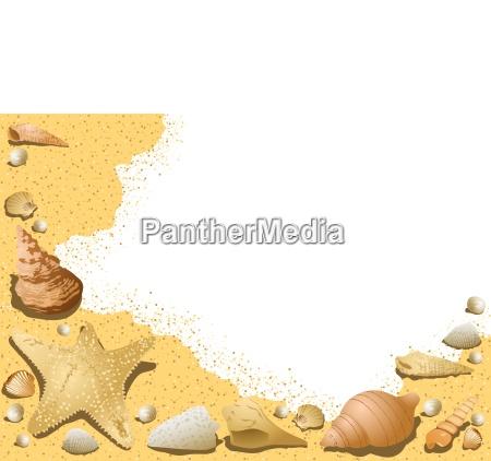sandy background with seashells