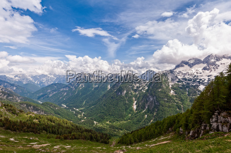 fahrt reisen baum baeume berge alpen
