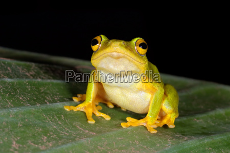 tier amphibie afrika frosch aquatisch natur