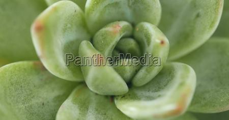 top view green succulents plant