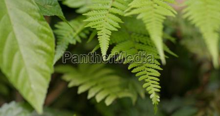 green plant fern