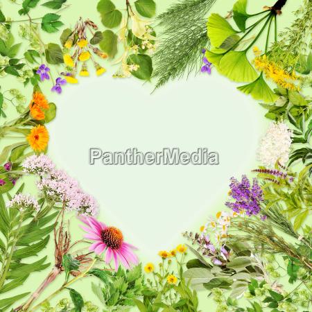 medicinal plants heart frame
