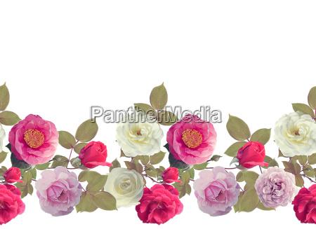roses border watercolor