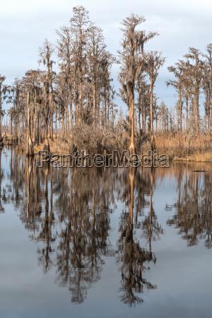 zypressen reflections on a southern bayou
