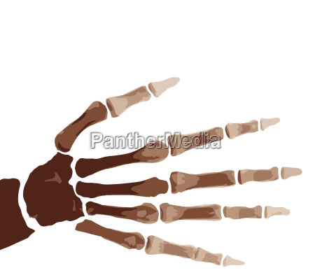 isolated boney hand