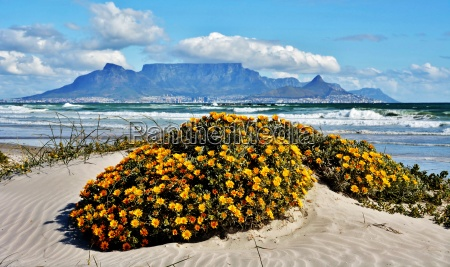 landscape with cape town and table