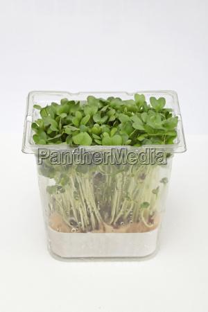 watercress in box