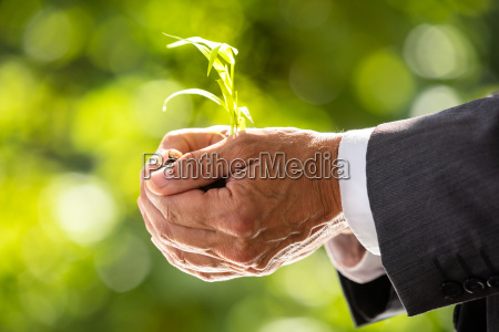 businessman holding plant with soil