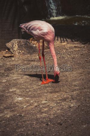 pink flamingo essen