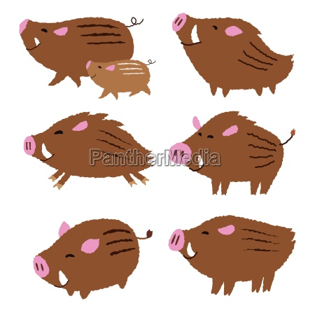 cute wild pigs wild boars chinese