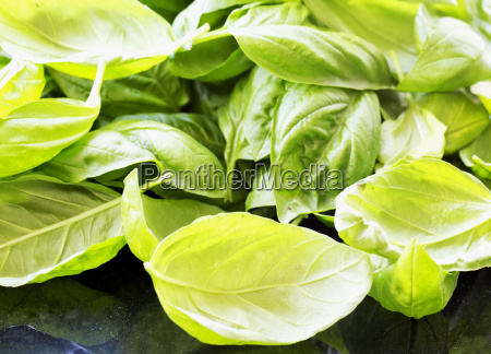 basil leaves over black table