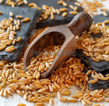 raw kamut grain in a wooden