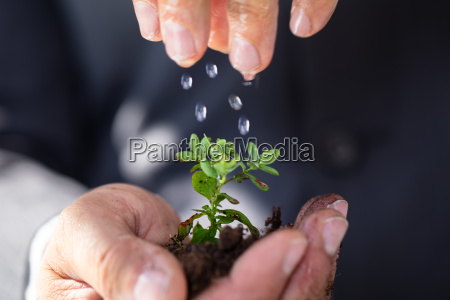 person watering to sapling
