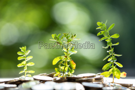 plants growing in saving coins