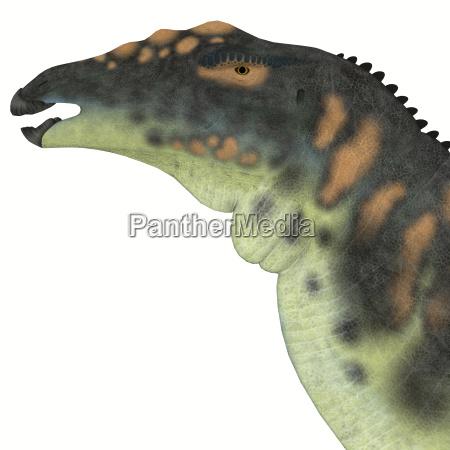 ouranosaurus dinosaurierkopf
