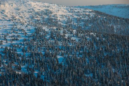 winter mountain forest alpine scenery