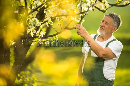 portraet des seniorengartens die pflege seines