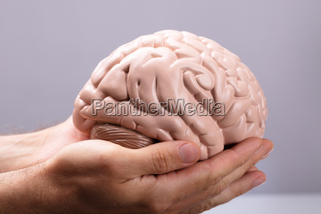 persons hand holding human brain model