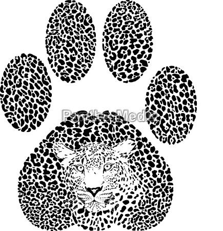 leopard fussabdruck