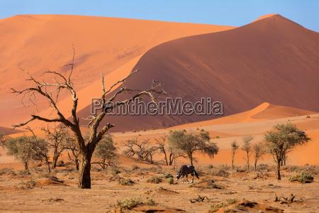 tote vlei landschaft in sossusvlei namibia