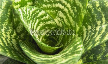 green leaf macro green fresh plants