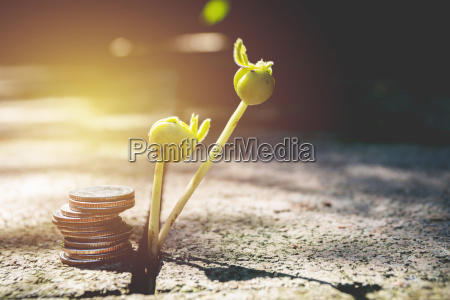 young green plant with stack coin