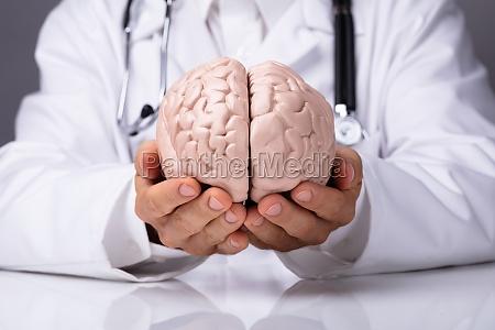 doktor wenn menschliches gehirn modell gehalten
