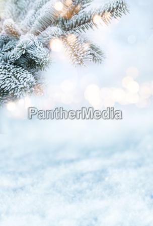 fir branches in winter