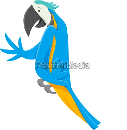 funny macaw bird cartoon animal character