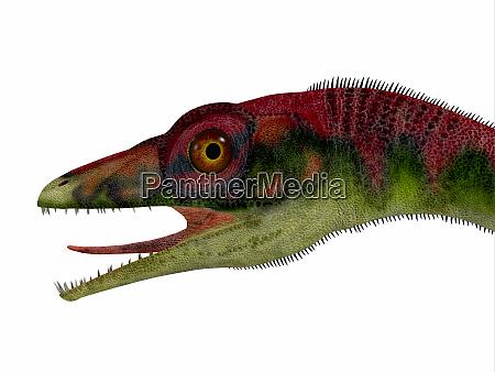 compsognathus dinosaurier kopf