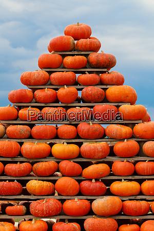 pyramide aus herbst geerntetkuerbisse
