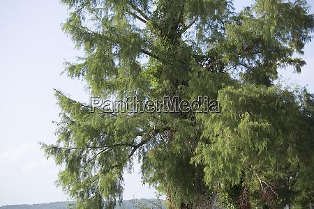 umwelt baum botanik wachstum vegetation pflanzenkunde