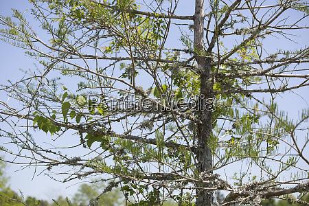blatt baumblatt umwelt farbe baum baeume
