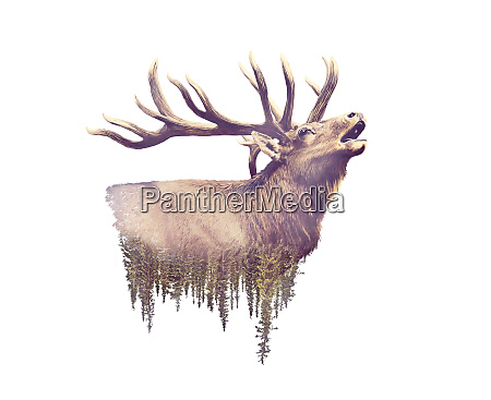 elk and forest watercolor double exposure