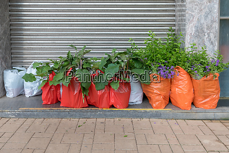 plants delivery